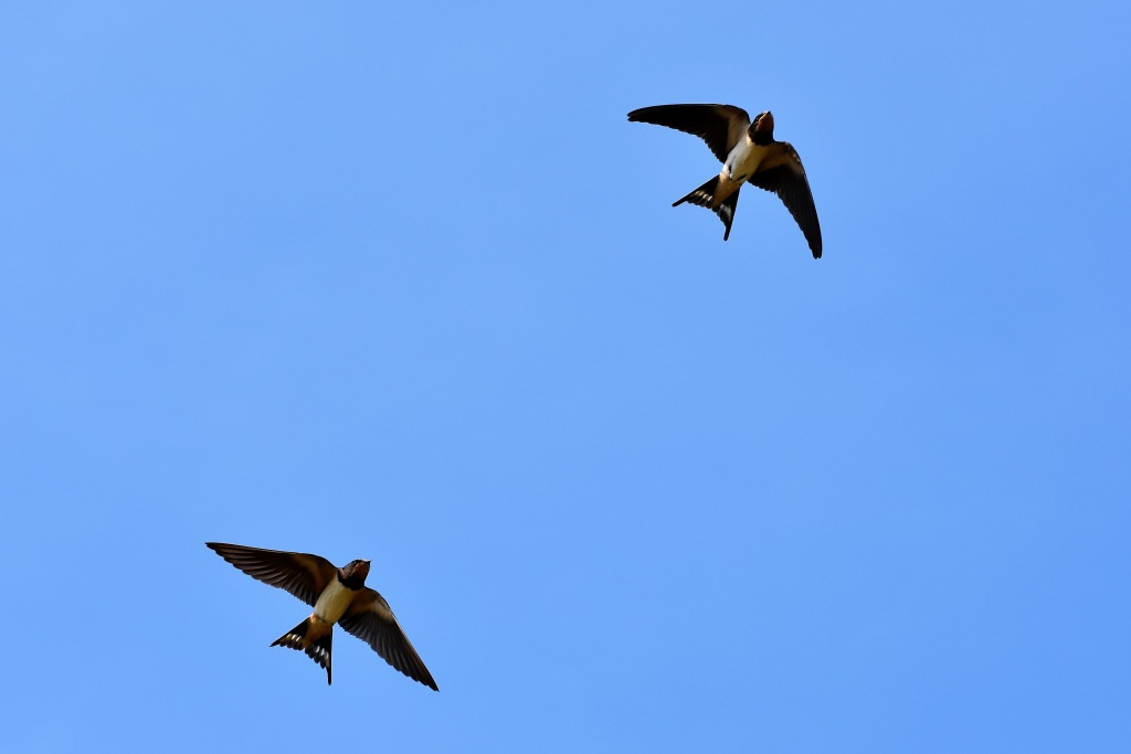15 June - Swallow lake