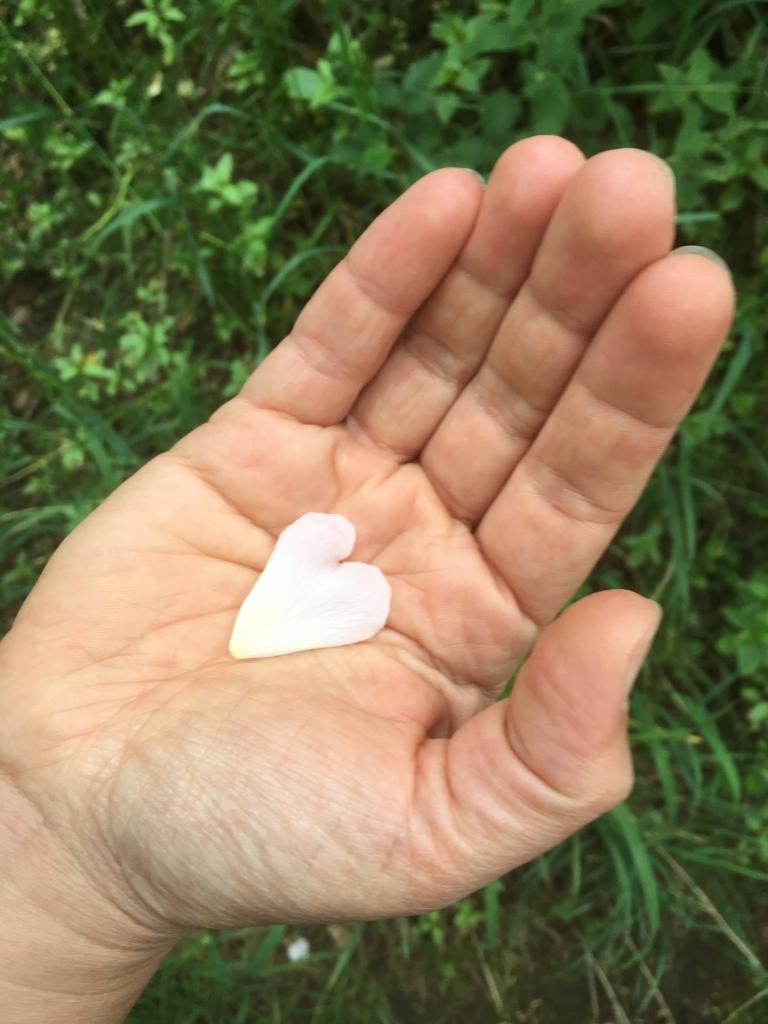 17 June - Petal heart