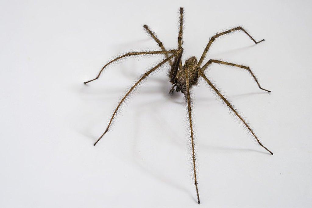 31 October - Arachnid invasion