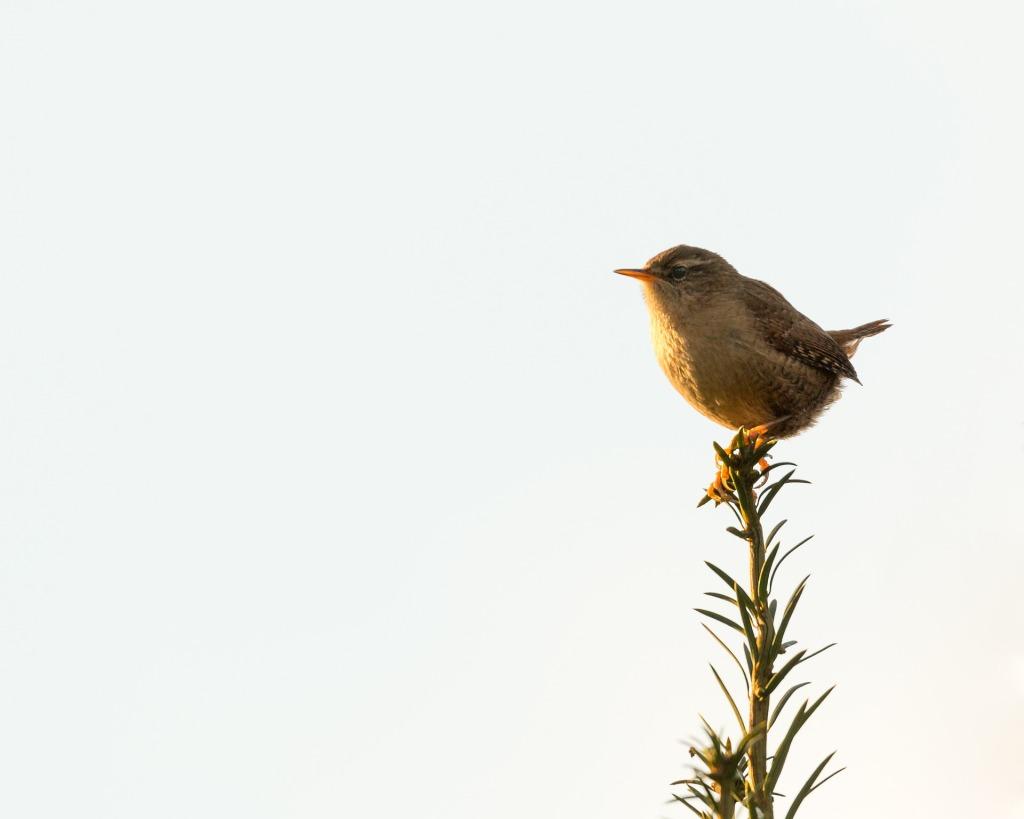14 December - The Christmas bird