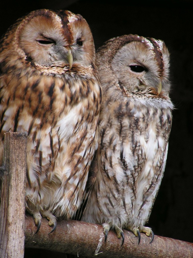25 February - A twit twoo who's who