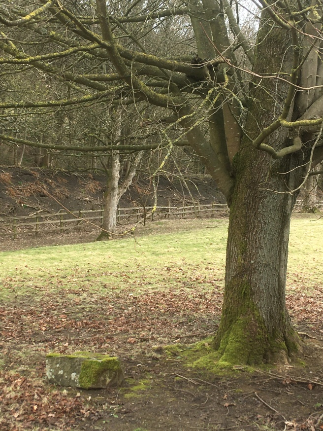 30 March - Dear oak tree