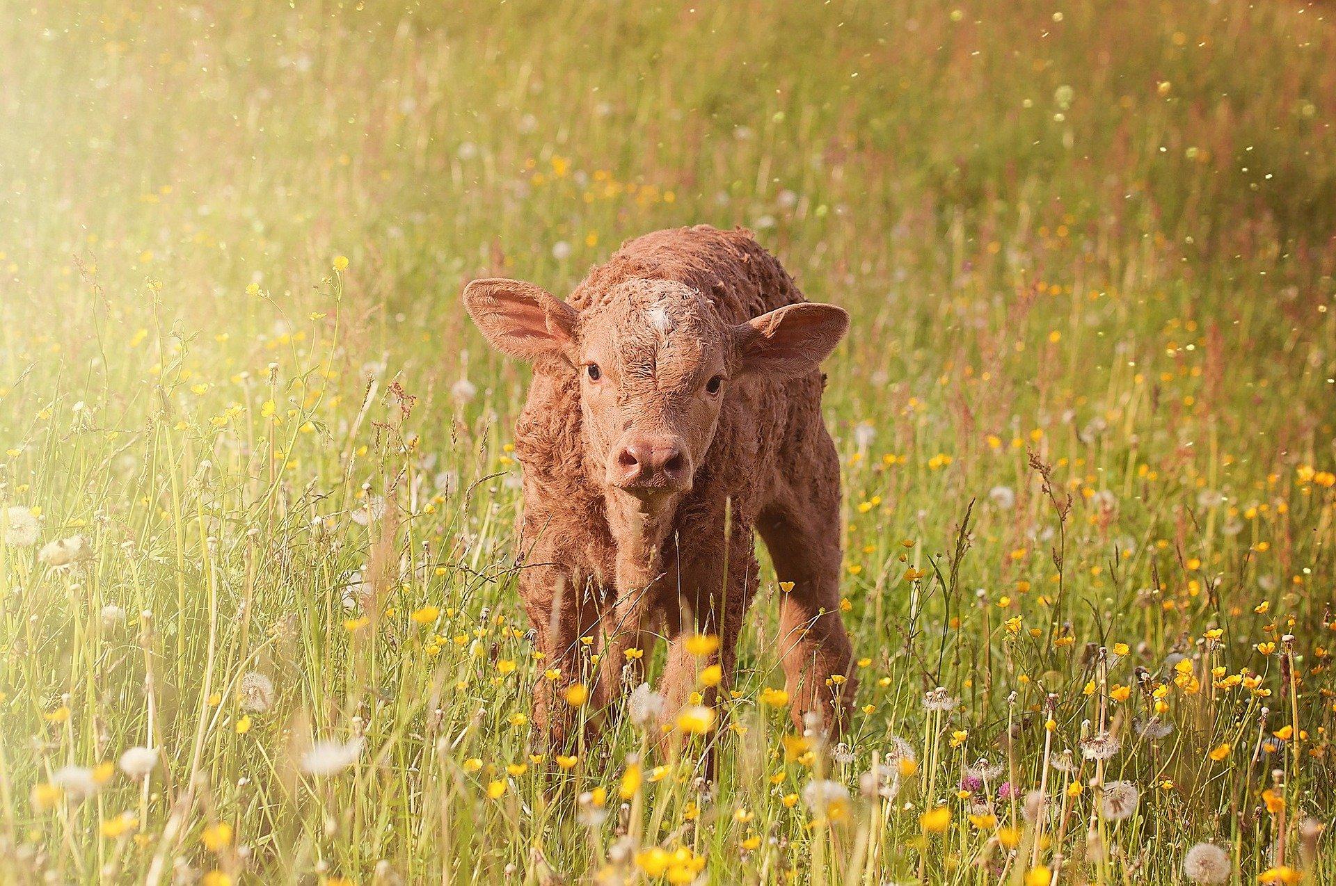 28 May - Newborns (Taboo joy)