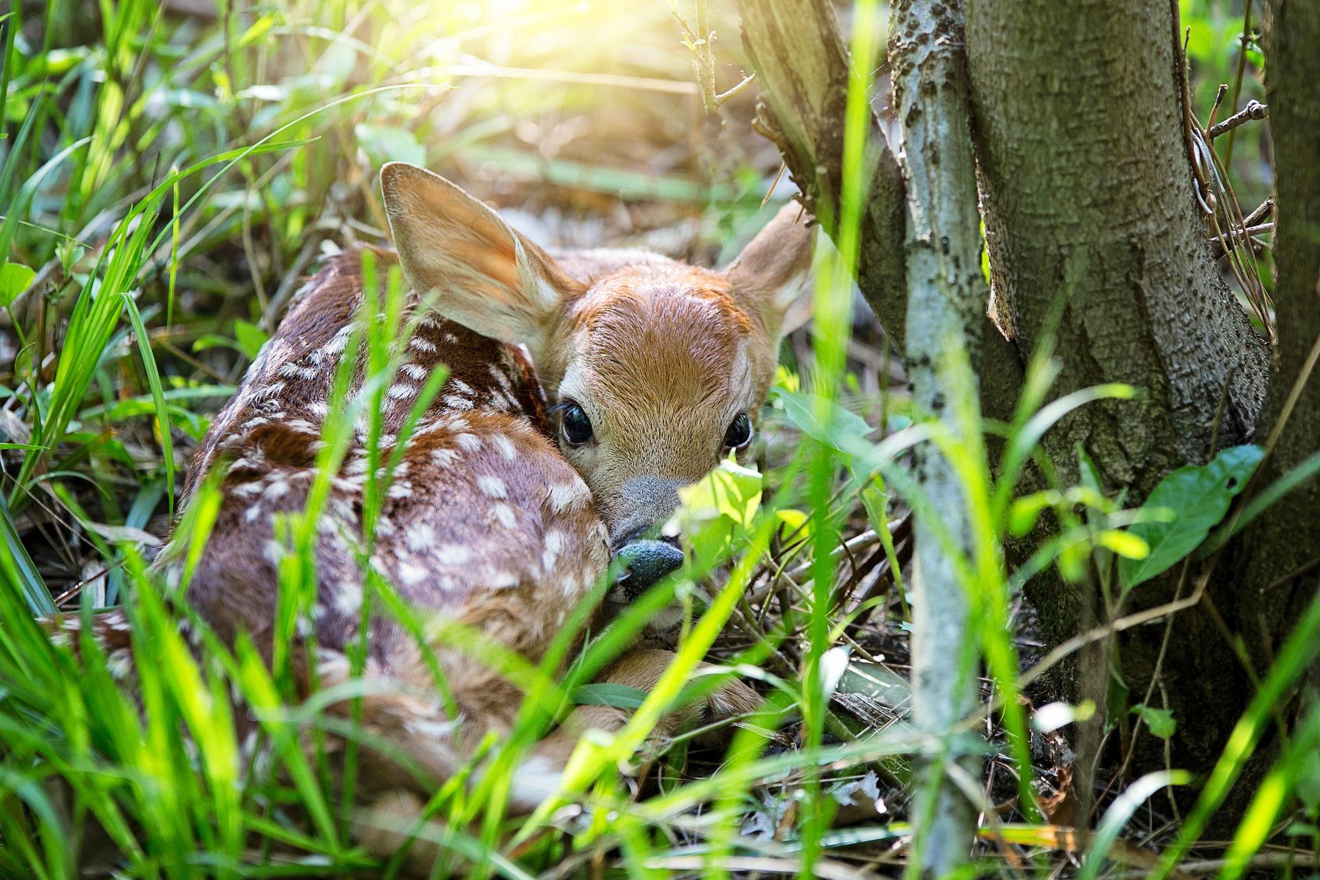 28 May - Newborns (I - Nettle nest)