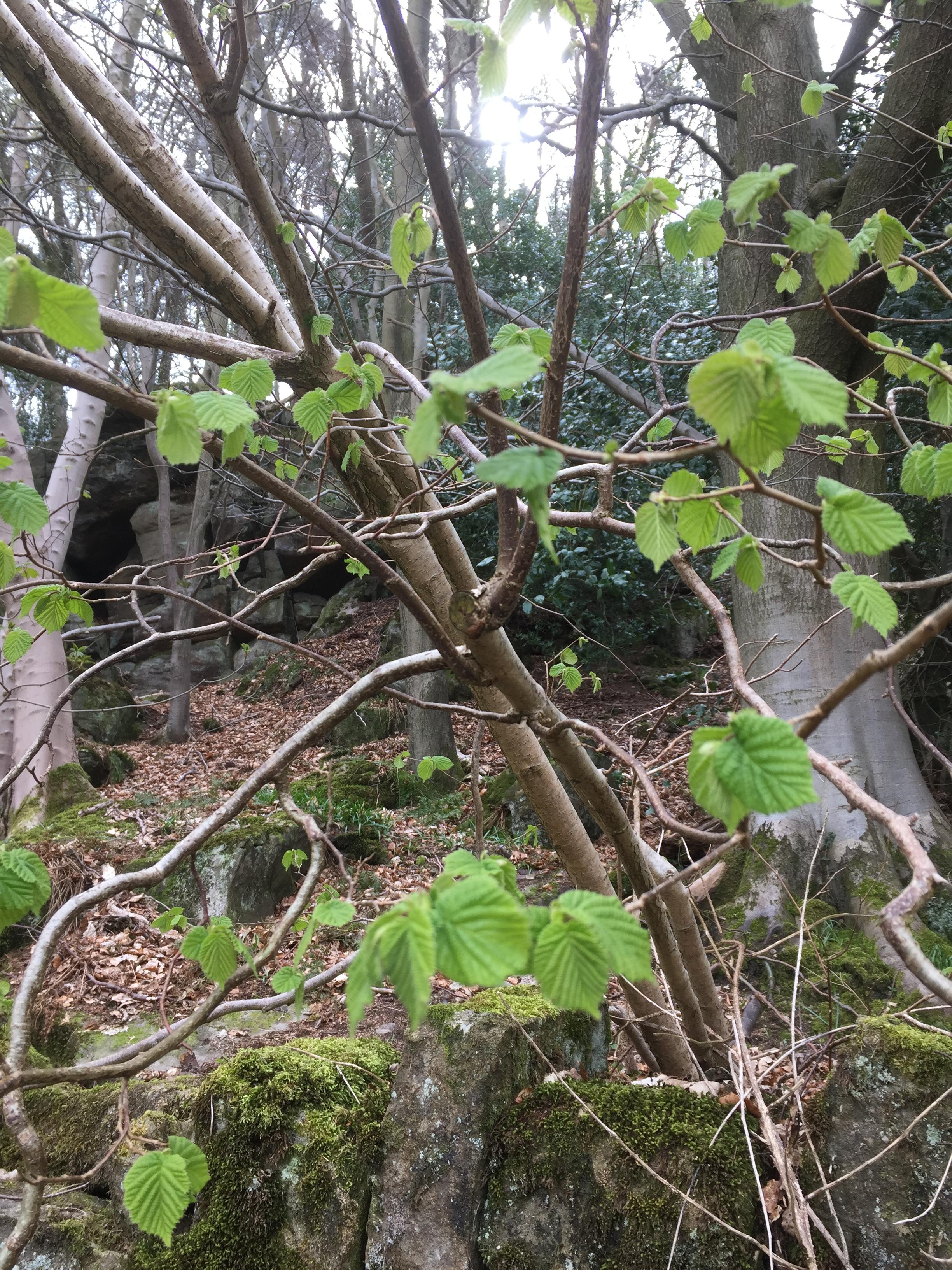 11 May - Tricksy trees 3